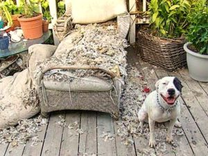 2-20-15-dogs-who-are-proud-they-trashed-your-house4