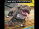 Pit-Bull-with-Dwarfism-Dumped-By-Breeder-Meets-BEST-DAD-EVER