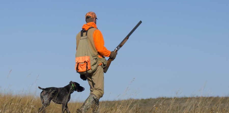 Hunting Dog Duck Rescue