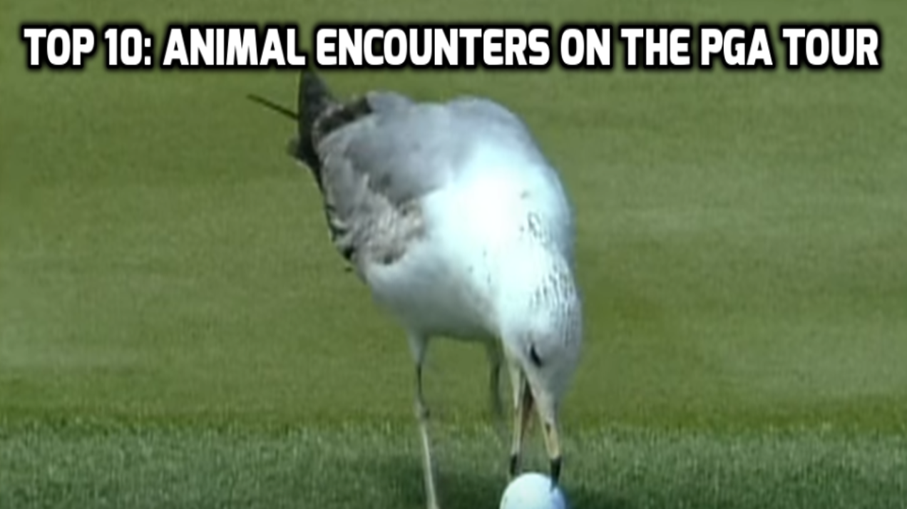 Top-10-Animal-Encounters-on-the-PGA-TOUR
